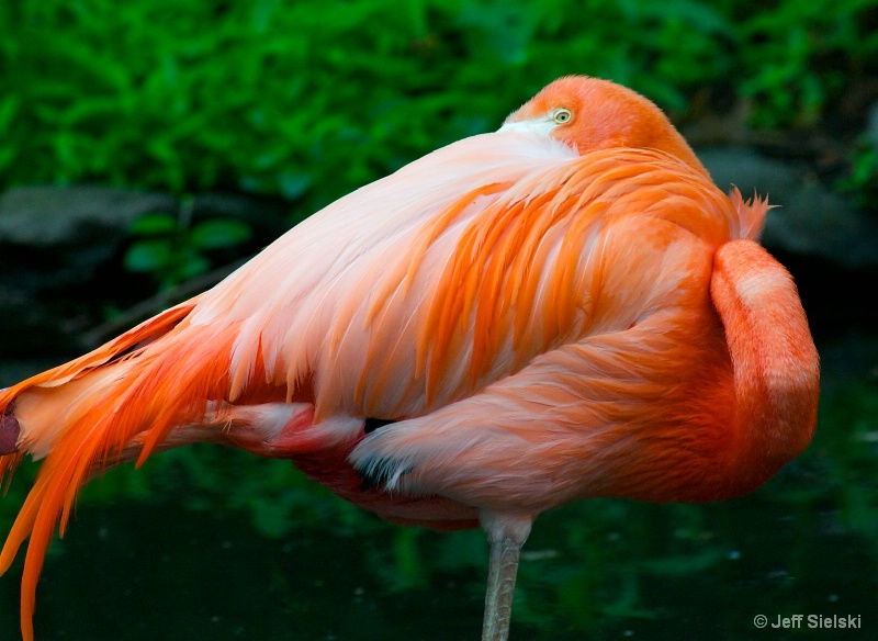 Relaxing At The Pond!!  Flamingo