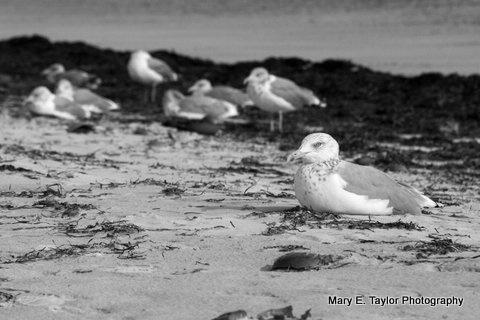 seagulls at sunset beach - ID: 14927210 © Mary E. Taylor
