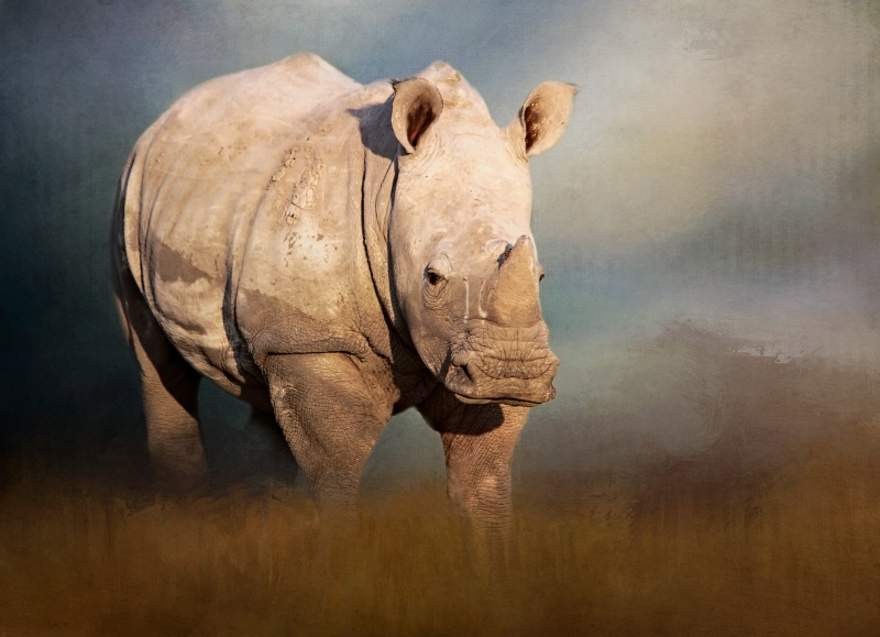 Young White Rhino!