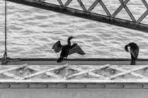 Bridge Mates
