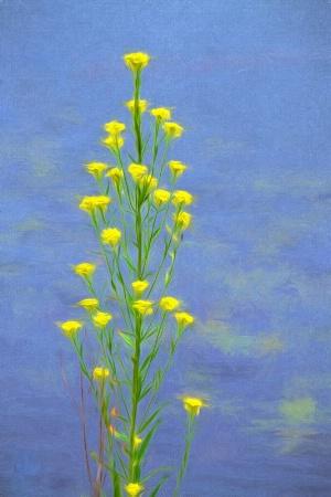 Wild Flowers with Impression!