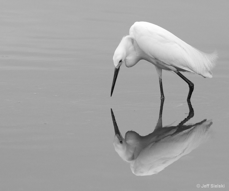 Mirror Mirror On The Lake!!  Great Egret-B&W