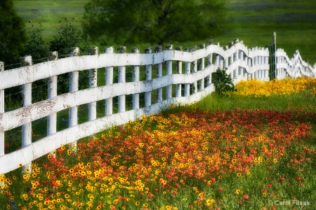 Fences and Flowers