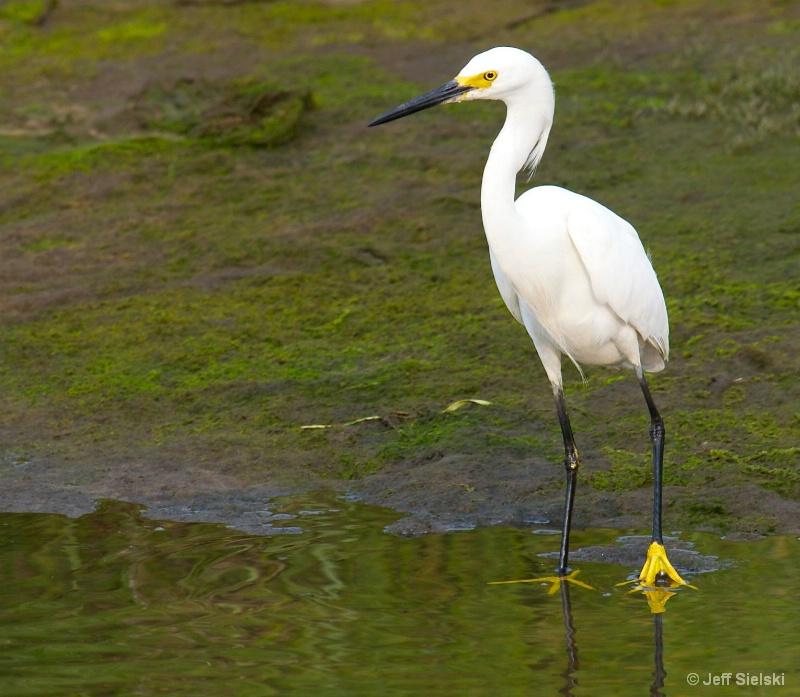 Takin' A Short Break!!  Snowy Egret