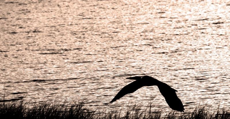 A SINGLE CRANE FLIES INTO SUNSET - ID: 14940835 © SHIRLEY W. BENNETT