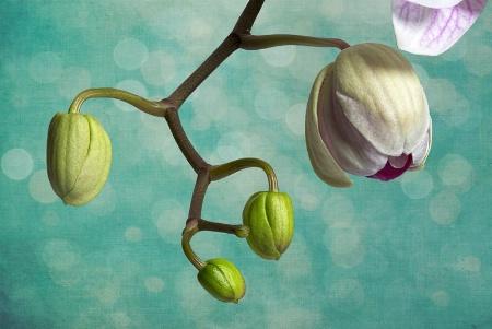 Receding Orchids