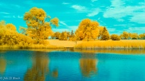 Lagoon trees