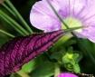 Purple Passion...