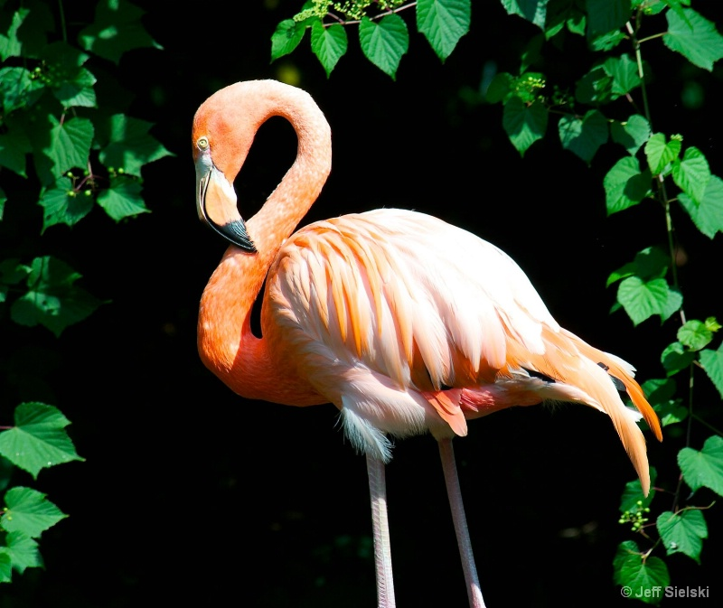 Looking Very Shic!!!   Flamingo