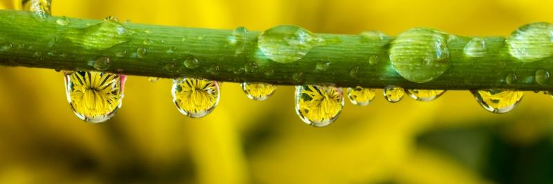 Water drops acting as a lens - ID: 14953321 © Thomas L  Willis