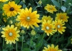 Pretty in Yellow....