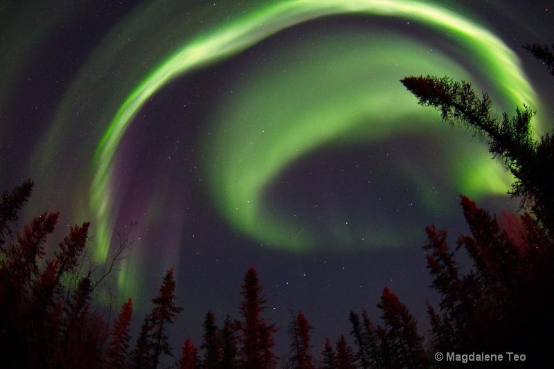 Aurora Swirl above the Treeline - ID: 14963970 © Magdalene Teo