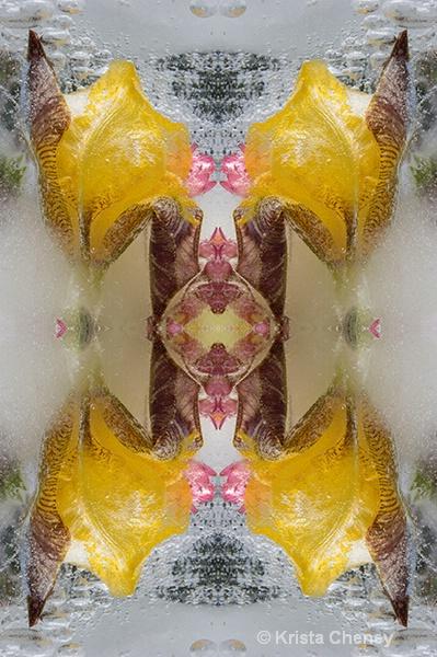 Iris in ice II—kaleidoscopic - ID: 14964225 © Krista Cheney