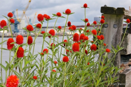 Flowers on the Pier...