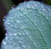 Nature's Desi...