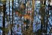 Fall Reflection _...