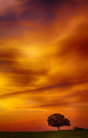 Lonesome Dawn