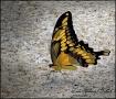 Butterfly on Pati...