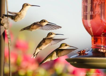 Golden Hour Dinner Flight