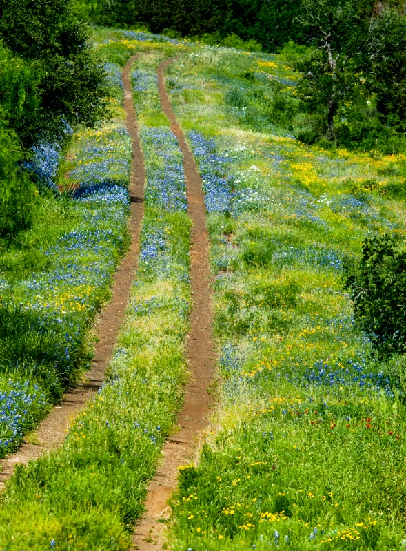 Through the bluebonnets - ID: 14970271 © Thomas L  Willis