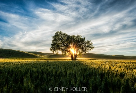 Lone Tree at Sundown