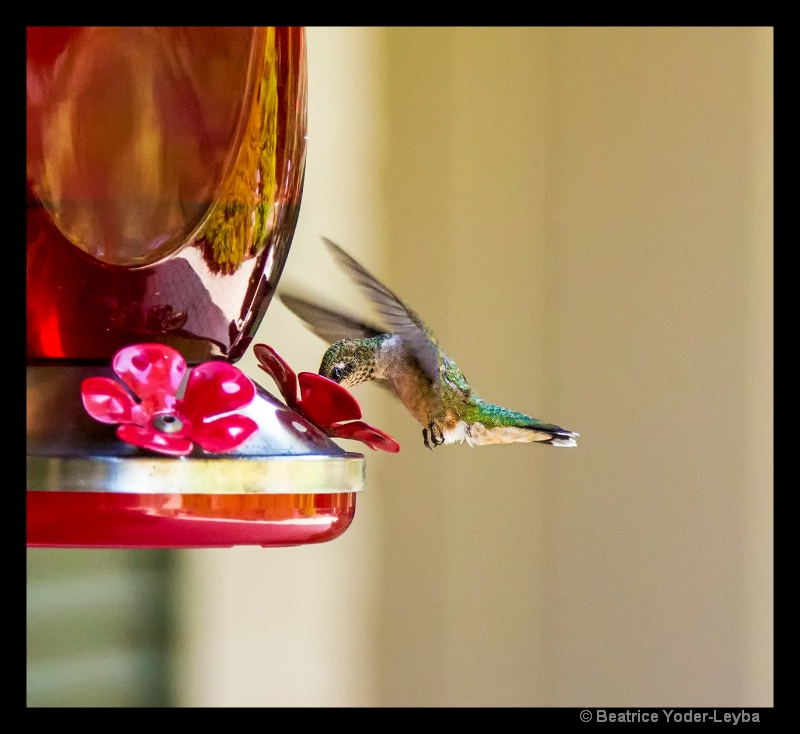 HUMMINGBIRD AT FEEDER - ID: 14971487 © Beatrice Yoder-Leyba