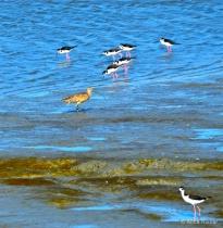 Baylands Birds-Daylight