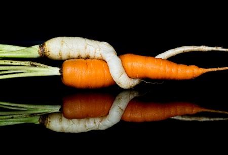 Cuddling Carrots