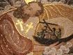 Monaco: a mosaic