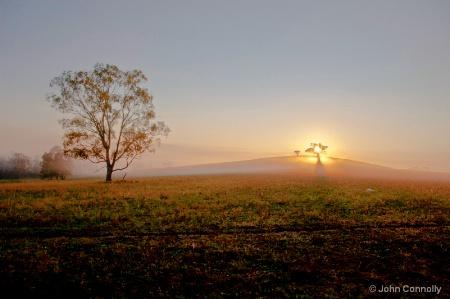 Sunrise at Tea Gardens.