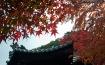 Autumn at Kyoto