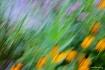 Field of flowers ...