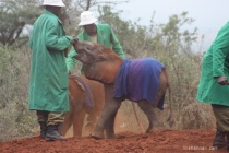Sheldrick Wildlife Trust - Orphans and Keepers