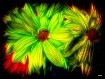 Painted Daisies--...