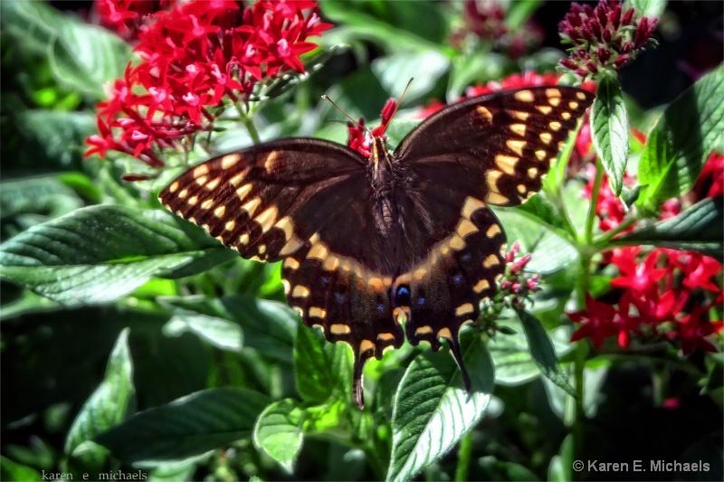 fluttering about - ID: 14992701 © Karen E. Michaels
