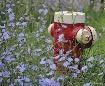 Hydrant in a fiel...