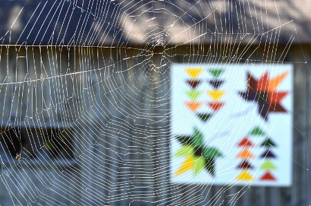 Web and Barn Quilt