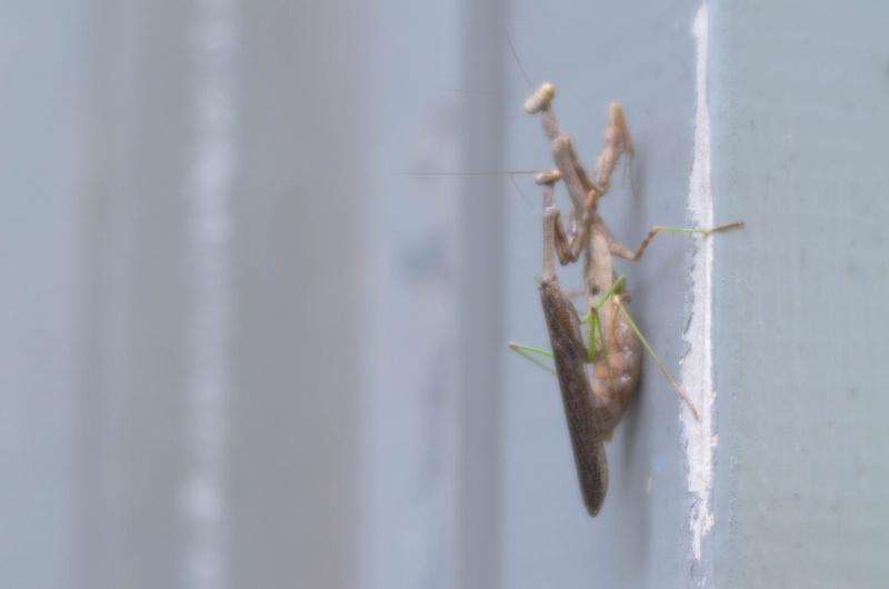 Praying Mantises - ID: 15016164 © Nora Odendahl