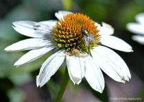Alights On A Flower