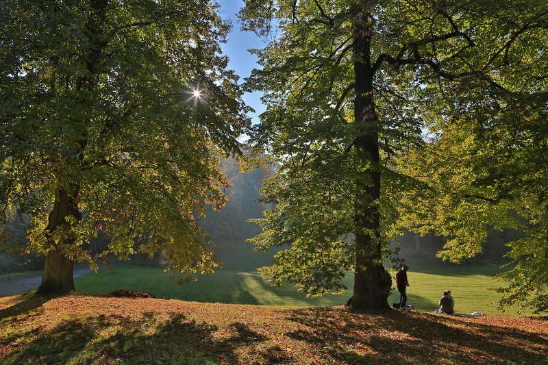 Under the Tree - ID: 15017880 © Ilir Dugolli