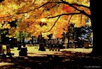 Foliage at Pine Hill