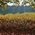 2Falling Leaves - ID: 15021912 © Ilir Dugolli