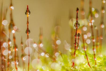 Morning Sparkles