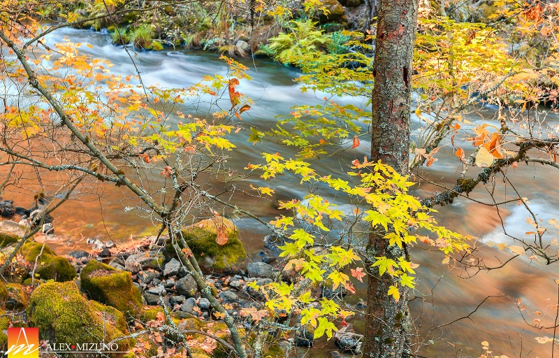 Autumn in Burney Creek