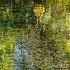 2Impressions of Monet - ID: 15025881 © Carol Eade