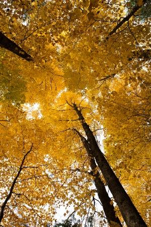 Autumn In Full Colour
