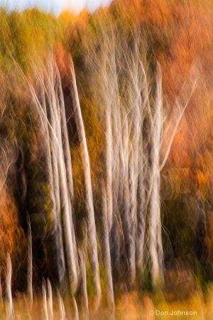 Fall Trees Abstract 3-0 f lr 10-26-15 j280