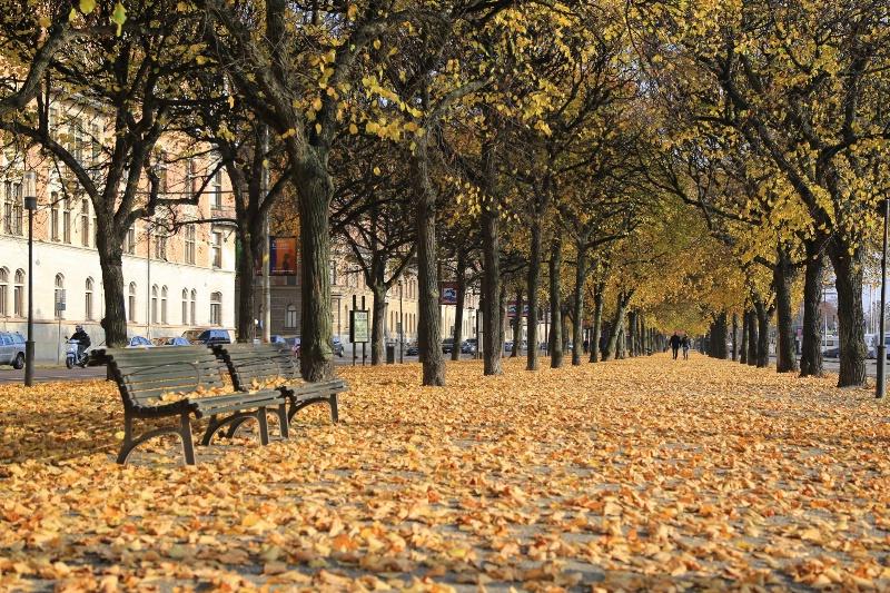 Couple on Golden Carpet - ID: 15030568 © Ilir Dugolli