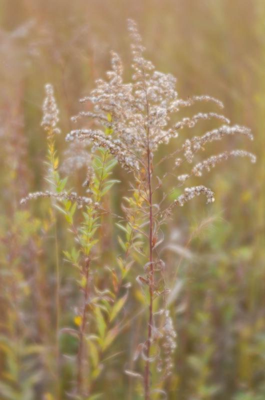 Foulkeways Meadow - ID: 15031531 © Nora Odendahl