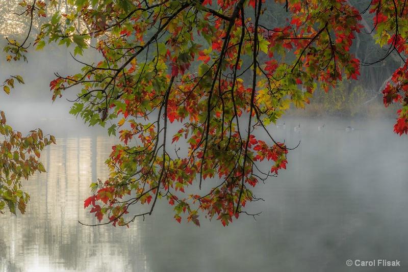 Under the Bough on a Foggy Morn - ID: 15032052 © Carol Flisak